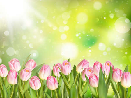 april beautiful: Spring Easter background with beautiful pink tulips. Summer flower background. EPS 10 vector file included