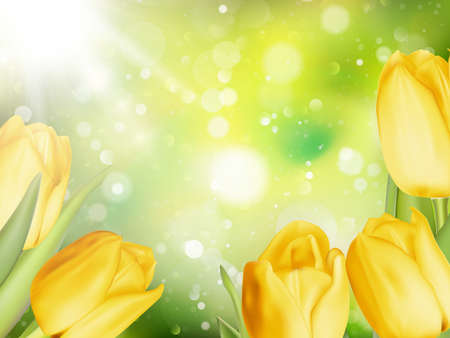 macro flowers: Blurred background of Yellow colored tulips. Illustration