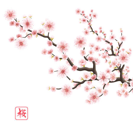 Realistic sakura japan cherry branch with blooming flowers.