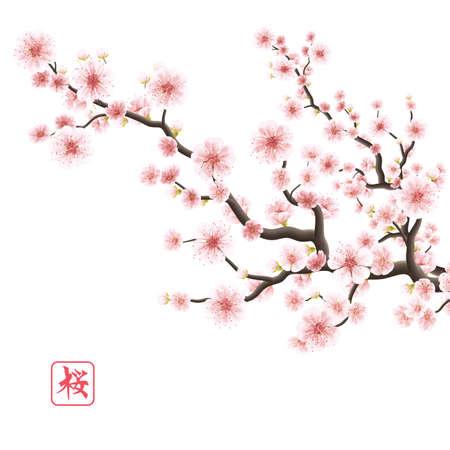 ast: Realistische Sakura Japan Kirsche Zweig mit blühenden Blumen.
