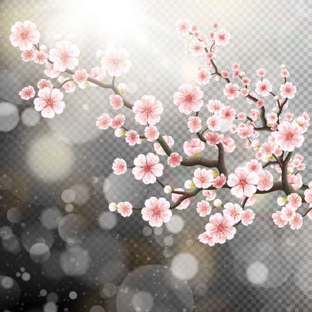 Beautiful template with blossoming dark and light pink sakura flowers. 矢量图像