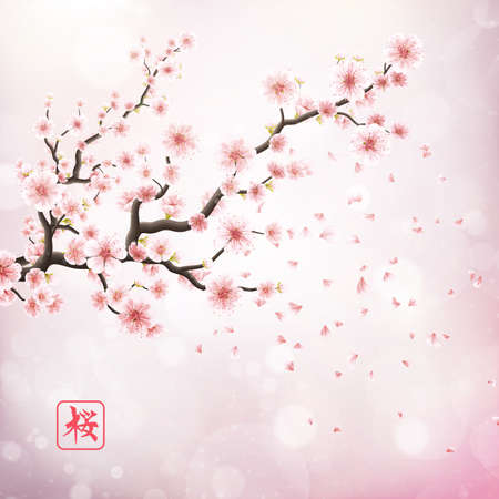 Nature background with blossom branch of pink sakura flowers. Template isolated on white background.