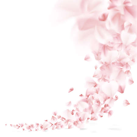 Sakura flying petals on white background.