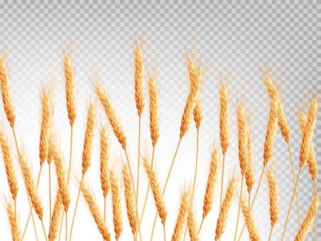 Espigas de trigo patrón horizontal. archivo vectorial EPS 10 incluido
