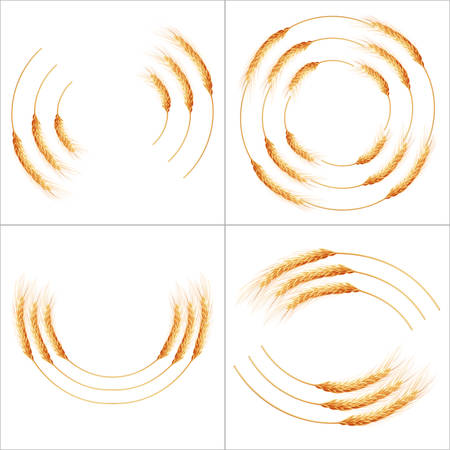 agriculture industry: Set of 16 detailed Wheat ears, Cereal ears, isolated on white background. Agriculture industry background. EPS 10 vector file included