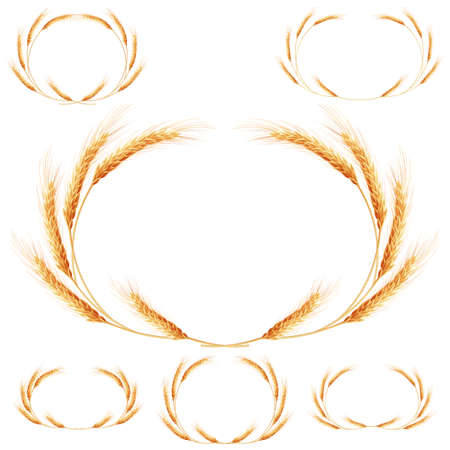 agriculture industry: Set of 6 detailed Wheat ears, Cereal ears, isolated on white background. Agriculture industry background. EPS 10 vector file included
