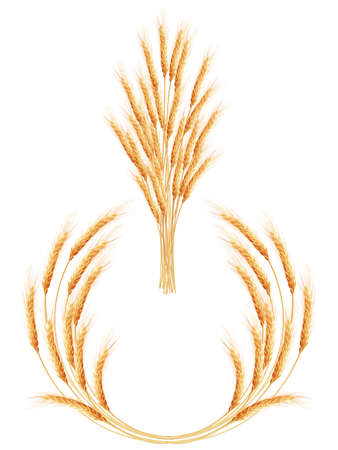 agriculture industry: Set of 2 detailed Wheat ears, Cereal ears, isolated on white background. Agriculture industry background. EPS 10 vector file included