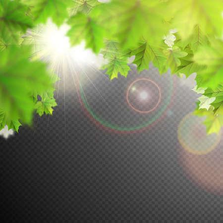 luz natural: Verano deja la plantilla en el fondo transparente. Vectores