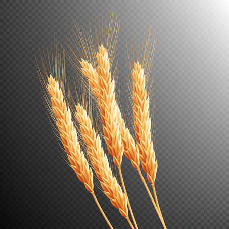 grain fields: Wheat ears isolated on transparent background with space for text.
