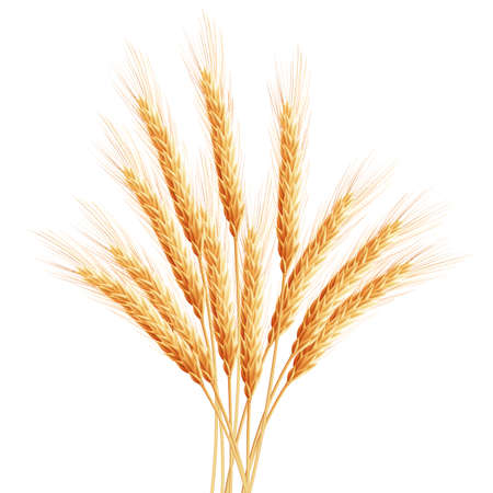 reaping: Wheat ears with space for text.