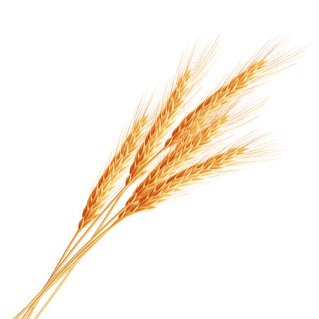 grain fields: Wheat ears with space for text.