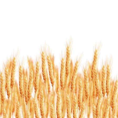 épis de blé avec espace pour le texte. Vecteurs