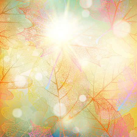 dazzling: Beautiful autumn background with sun.