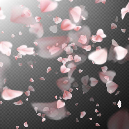 the petal: Bright cherry petals fall down. A lot of pink petals on transparent background. Nature backdrop.