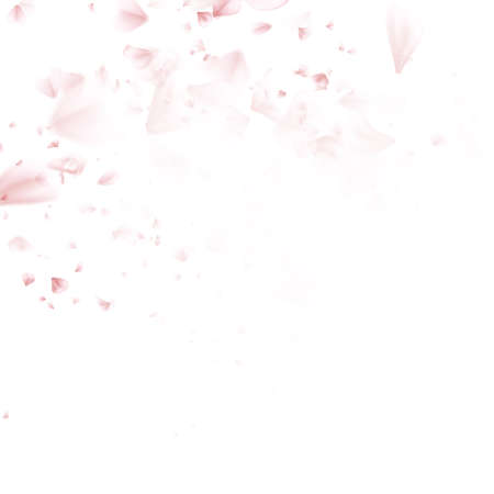 wedding background: Beautiful pink cherry blossom, isolated on white background. Stylish floral spring wallpaper. Greeting or invitation card. EPS 10 vector file included