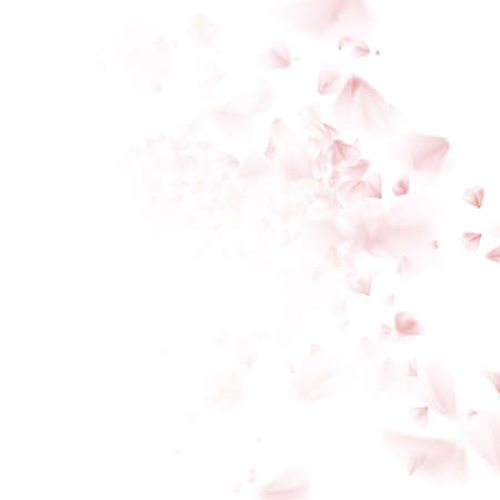 Blossoming sakura - Japanese cherry tree falling petal. Beautiful cherry blossom pink, isolated on white background. EPS 10 vector file included