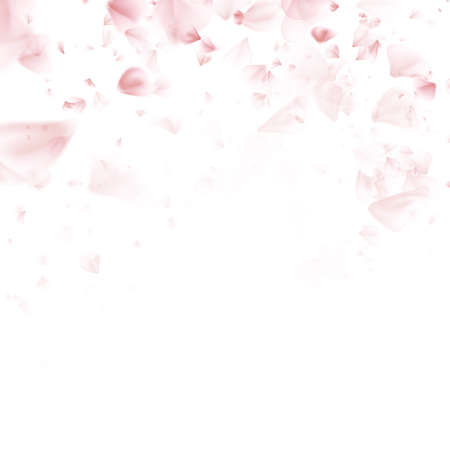Beautiful light spring pink flying petals of sakura - Japanese cherry tree. Floral romantic white wallpaper. EPS 10 vector file included