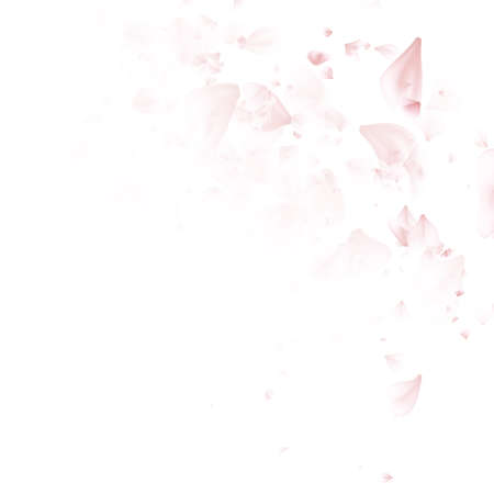 Sakura flowers. Cherry blossom petals falling on White background. EPS 10 vector file included