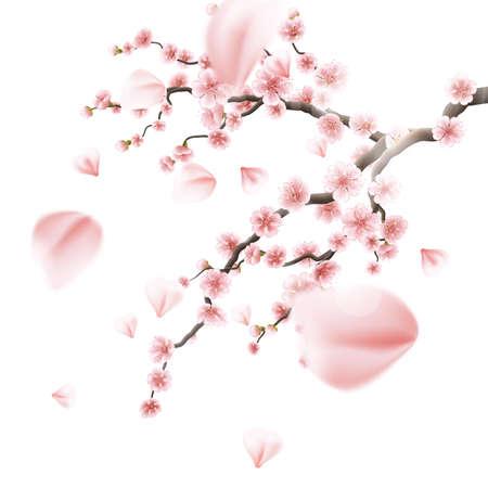 cerezos en flor: Realista Sakura Japan rama de cerezo. 10 EPS