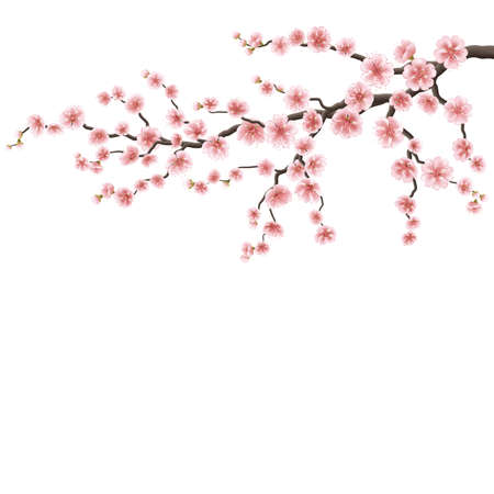 Branch of a blossoming cherry tree. EPS 10