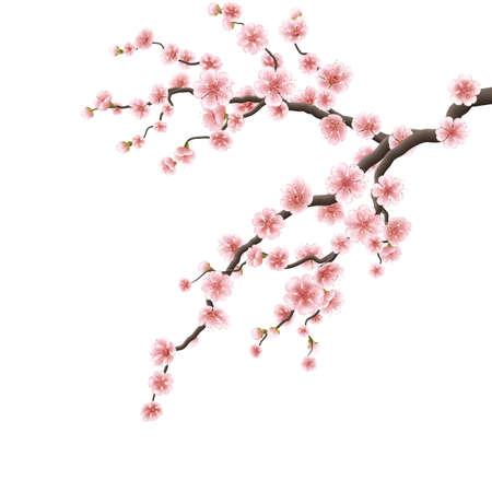 flor de cerezo: Cerezo de sucursales. 10 EPS