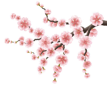 Spreading branch of pink cherry blossom. EPS 10
