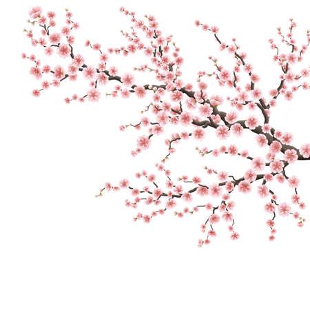 Realistic sakura japan cherry branch. EPS 10