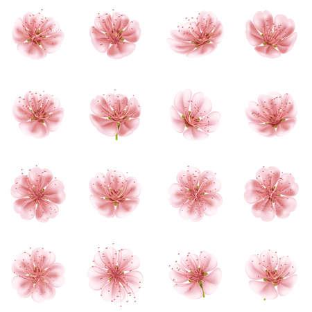 cherries isolated: Set of Sakura flowers. EPS 10