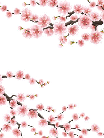 blossom background: Spring background with cherry blossom. EPS 10