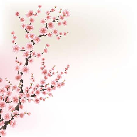 Kwitnące karty oddziału Cherry Blossom. EPS 10