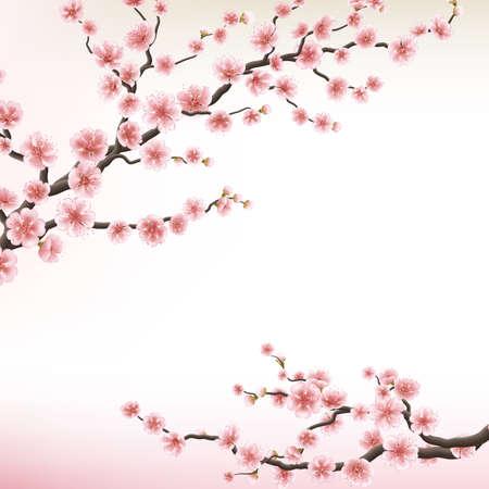 cherries isolated: Illustration of flowering branch of Sakura. EPS 10