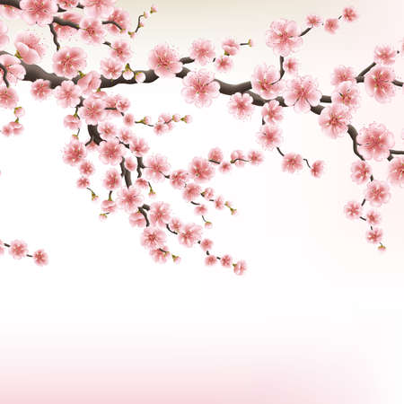 Blossom cherry tree branches. EPS 10