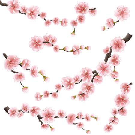 fleur de cerisier: Set of sakura japan cherry branch. EPS 10