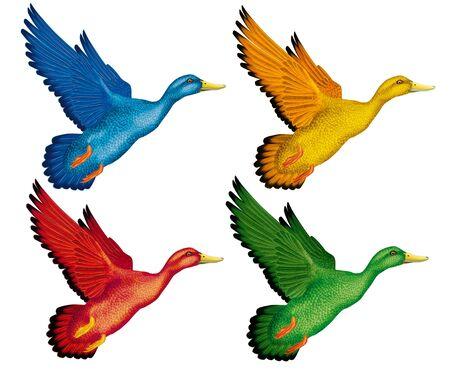 Duck flying realistic illustration