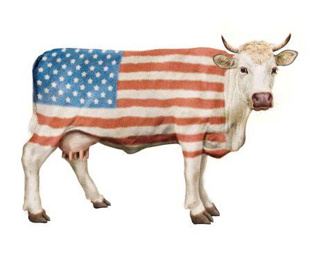 Cow illustration realistic design usa flag