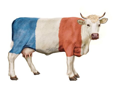 Cow illustration french flag design realistic Stock Photo