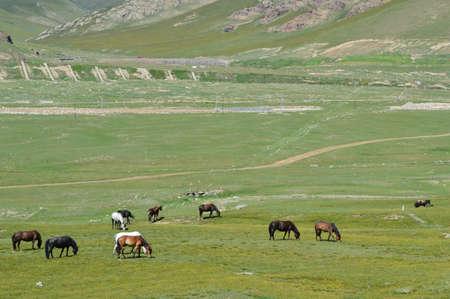 xinjiang: Tian Shan,Xinjiang,China