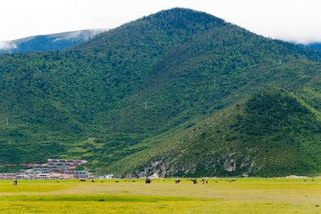 SHANGRILA, CHINA - Jul 31 2014: Napa Lake. a famous landscape in the Ancient city of Shangrila, Yunnan, China.