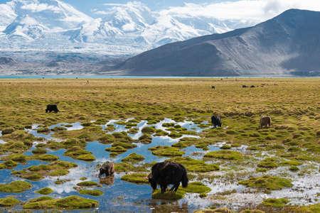 XINJIANG, CHINA - May 21 2015: Karakul Lake. a famous landscape on the Karakoram Highway in Pamir Mountains, Akto County,Kizilsu Kirghiz Autonomous Prefecture, Xinjiang, China.