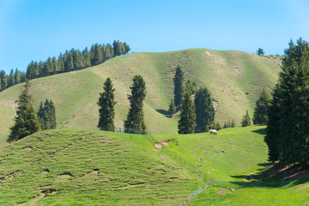 xinjiang: XINJIANG, CHINA - May 10 2015: Nanshan Pasture. a famous landscape in Urumqi, Xinjiang, China. Banque d'images