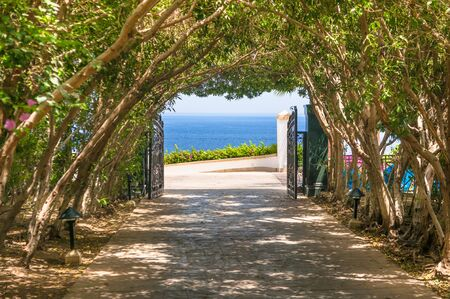 Natural arch of trees with access to seafront