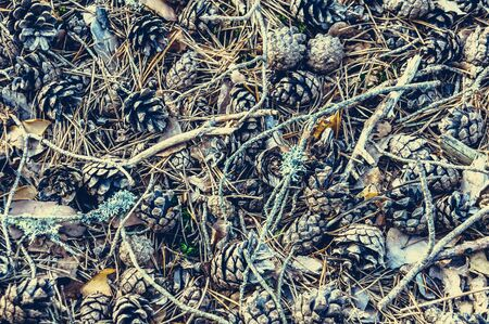 Natural pattern  of pine cones, twigs, conifer needles, withered leaves.