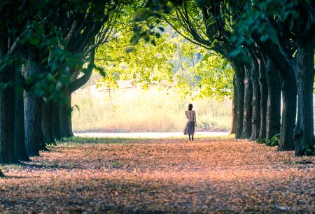 Distant little girl walking along alley of green trees in a park in the summer 免版税图像