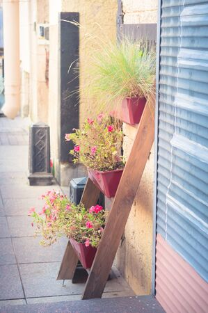 Plant stand with blooming flowers on city street leaning against wall