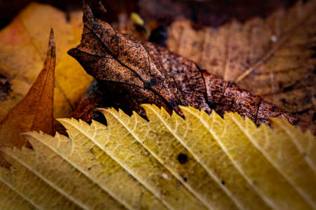 Macro image of autumn fallen leaves, yellow, brown and orange