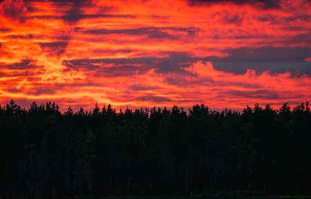 Red sunset with clouds over dark forest 版權商用圖片