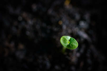 Macro shot of young seedling in soil