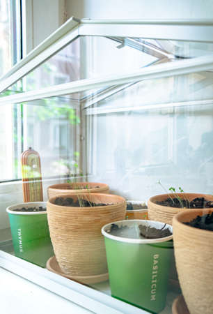 Flowerpots with young seedlings in a greenhouse