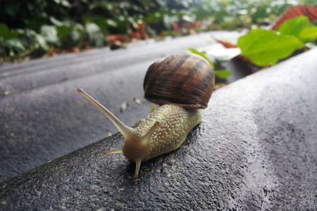 Close-up view of the snail on a structure after rain.