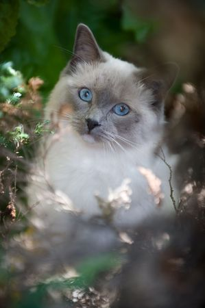 peers: A small cat peers through the out of focus garden foliage. Stock Photo